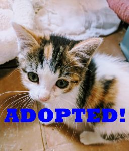 cali adopteed